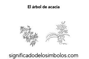 arbol de acacia símbolos masónicos