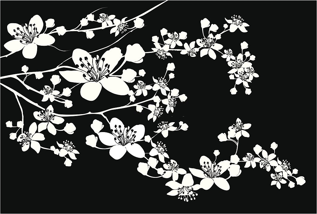 flor de cerezo japon